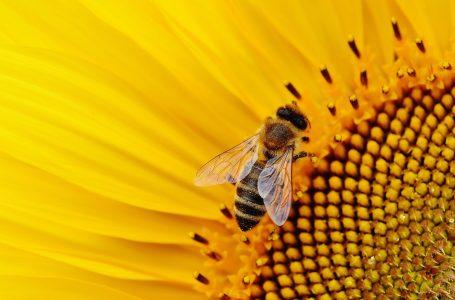 Pszczoły też miały swoje święto