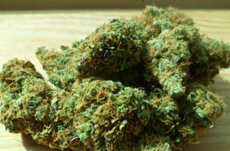 W mieszkaniu 29-letniego mężczyzny znaleziono 300 gramów marihuany